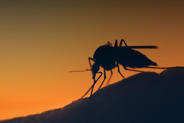 automated-mosquito-control