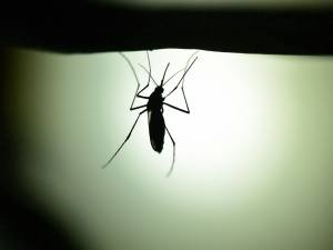 Backyard Mosquito Control Systems