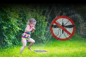 Mosquito Misting Systems In Charleston
