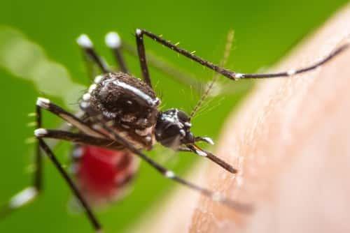 charleston-mosquito-control