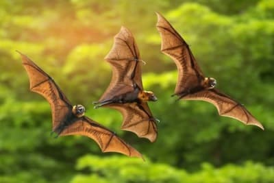 A Mosquito Swatter Bat Is Designed Just For This Let S Learn How To Build Its Electronic Circuitry The Idea Was Reed By Mr Kathiravan D