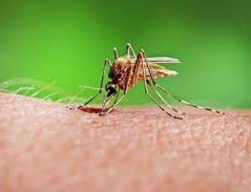 What are the Potential Health Hazards of Mosquitoes?