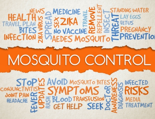 Learn About the Best Mosquito Control Options