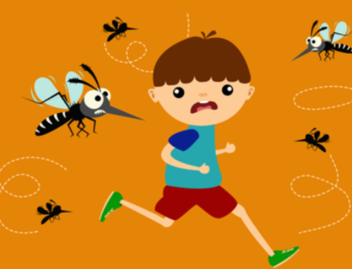 Top 5 Myths Surrounding Mosquitoes