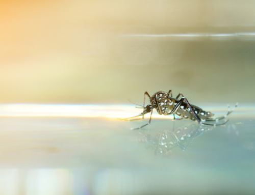 Tips For Keeping Mosquitoes Away From Your Pool and Backyard